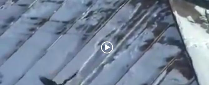 Спуск вороны на крыше